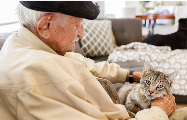 seniors and pets